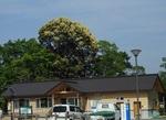 DSCN5089 - ビジターセンター(縮).JPG