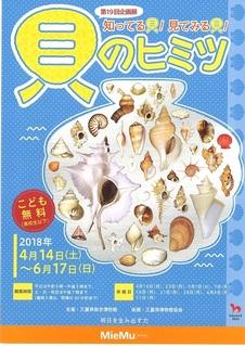 貝のヒミツ1.jpg
